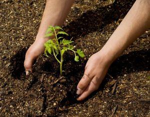Plant Again