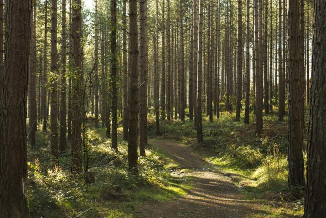 Path thru the Forest
